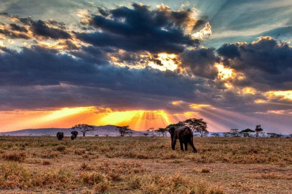 The Modern Safari