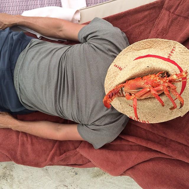 Soñando con la inmortalidad del cangrejo