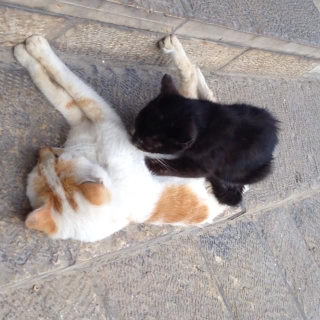 Cat giving a massage in Tel Aviv/ Gato dando un masaje en Tel Aviv